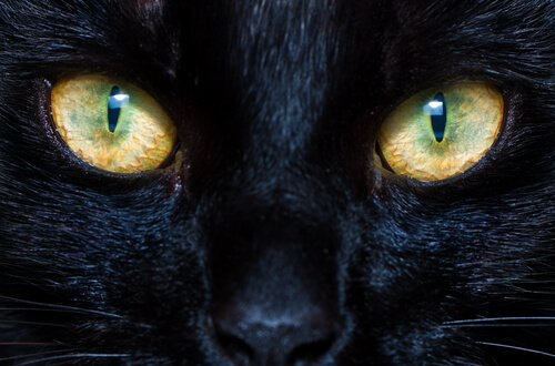 O funcionamento das pupilas de cães e gatos