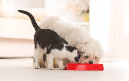 Cachorro e gato comendo na mesma vasilha