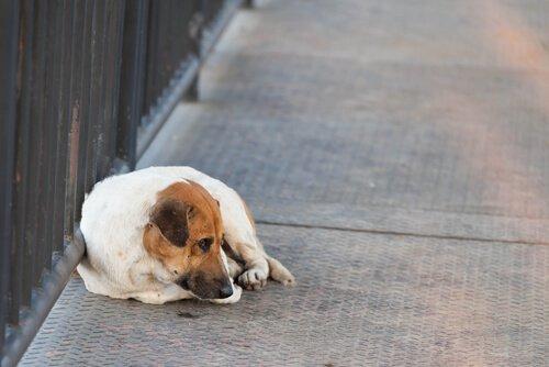 O que fazer se o seu animal de estimação está perdido?