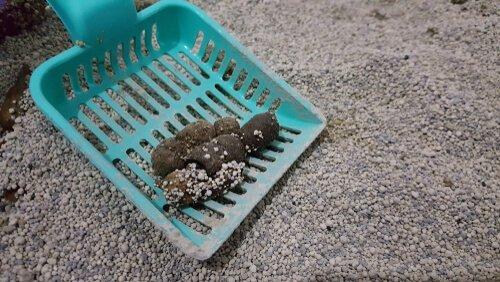 Retirando o cocô da caixa de areia usando uma pá