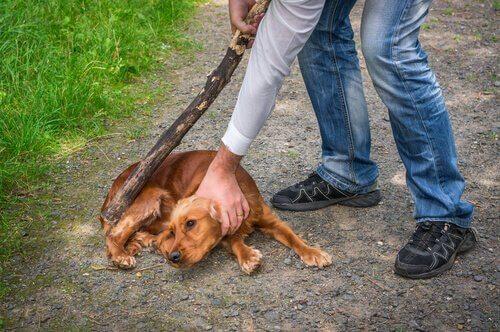 abuso de animais: homem com um pau para bater em um cachorro