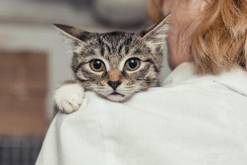 Ajuda veterinária contra o abuso de animais