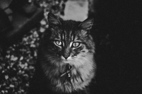 Visão noturna dos gatos
