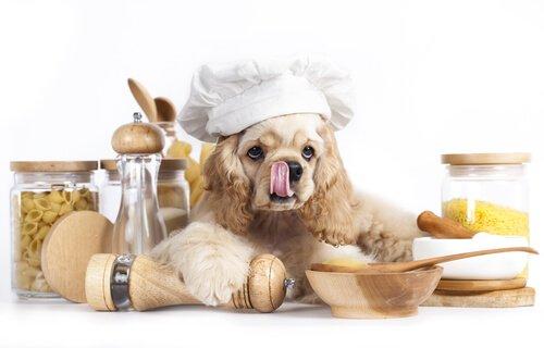 carboidratos para cães