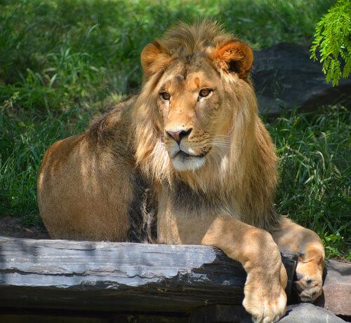 Quais animais não podem ser tidos como animais de estimação?