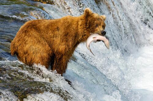 5 animais que vivem no Alasca