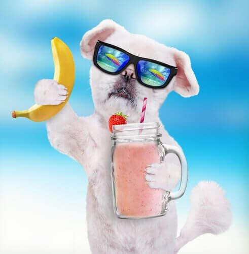 receitas de smoothies para cães