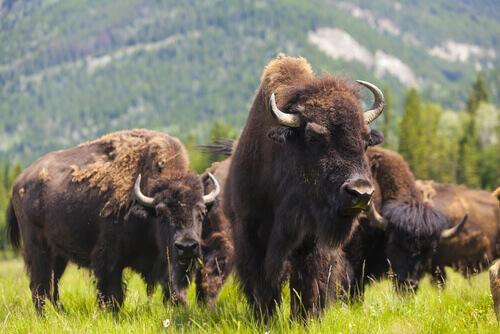 5 parques nacionais dos Estados Unidos