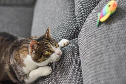 Gato perseguindo brinquedo