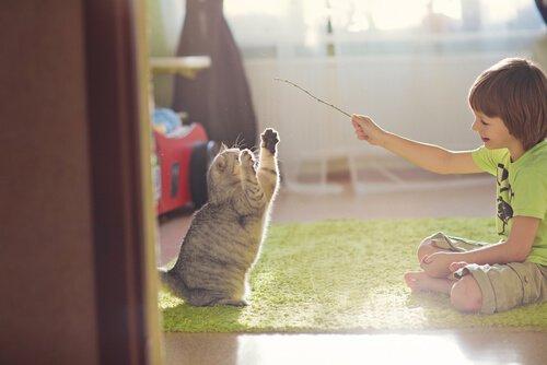 Dicas para brincar com seu gato