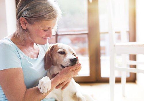 cães de terapia