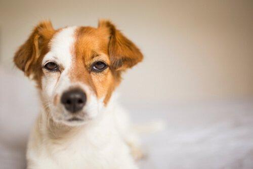 Cães são ciumentos?