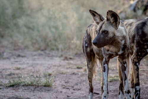 A fauna da África do Sul