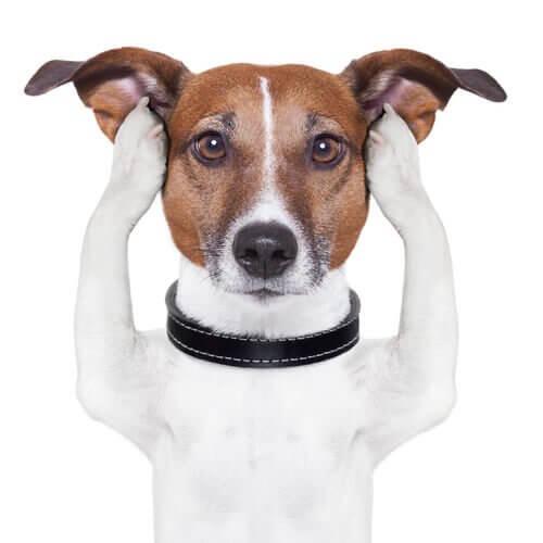 Cachorro tapando os ouvidos