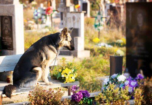 cão em túmulo do dono