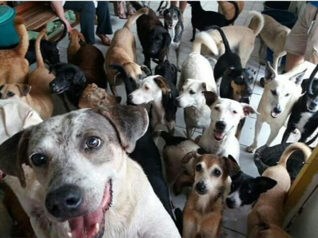 Cães do Abrigo do Sr. Alberto