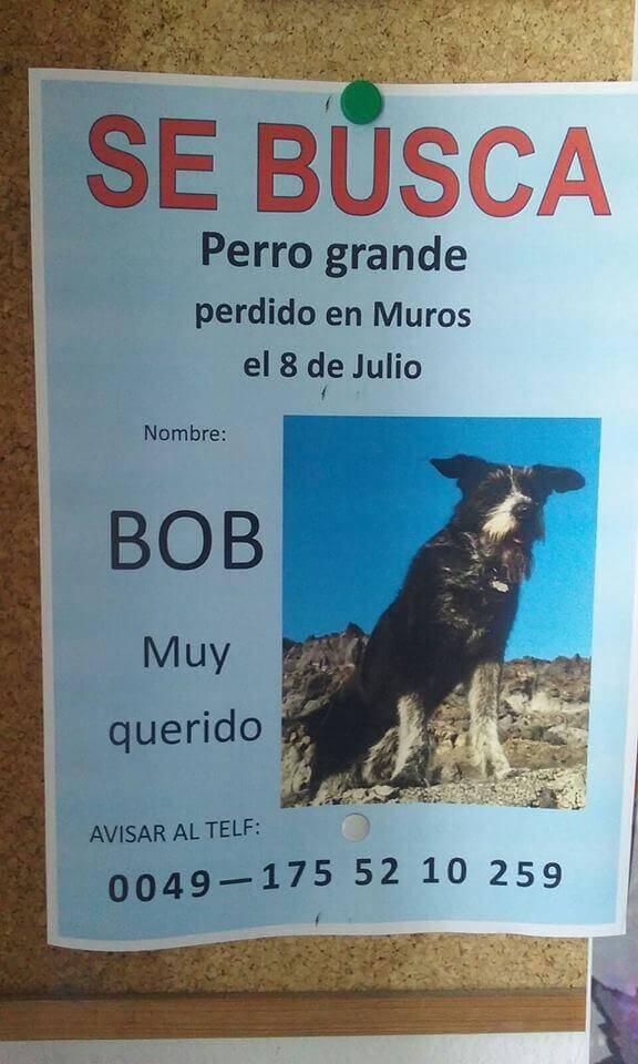 Cartaz para encontrar Bob