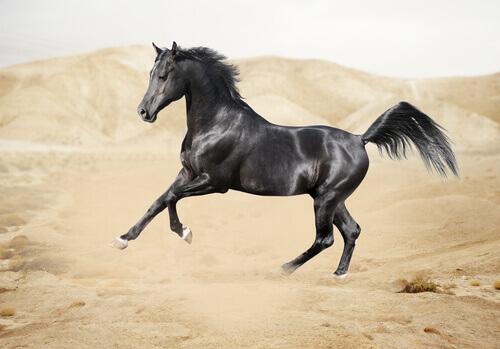 Como é a fauna na península arábica?