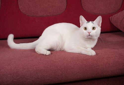 gato assustado no sofá
