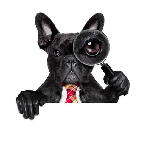 Curiosidades científicas sobre os cães