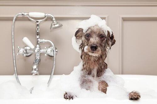 Como dar banho em um cão no inverno
