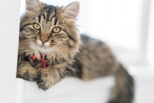 Tumores de pele em gatos, tipos, causas e tratamentos 48e0170479
