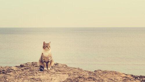 gato na praia