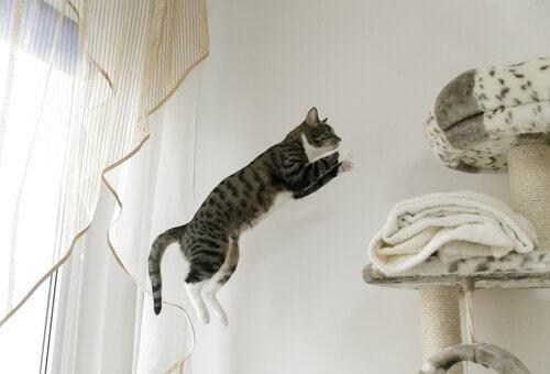 Gato saltando para arranhador