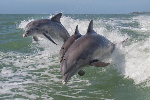 Golfinhos livres saltando no mar