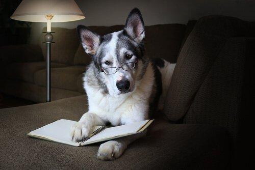 Cachorro de óculos e com livro: saiba curiosidades científicas sobre eles