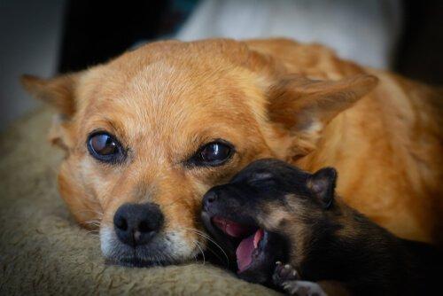 Cadela e filhote