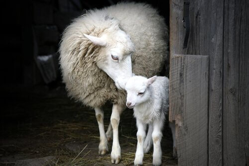 O impressionante instinto materno dos animais