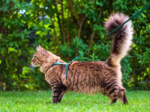 A linguagem da cauda dos gatos