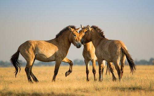 A linguagem dos cavalos