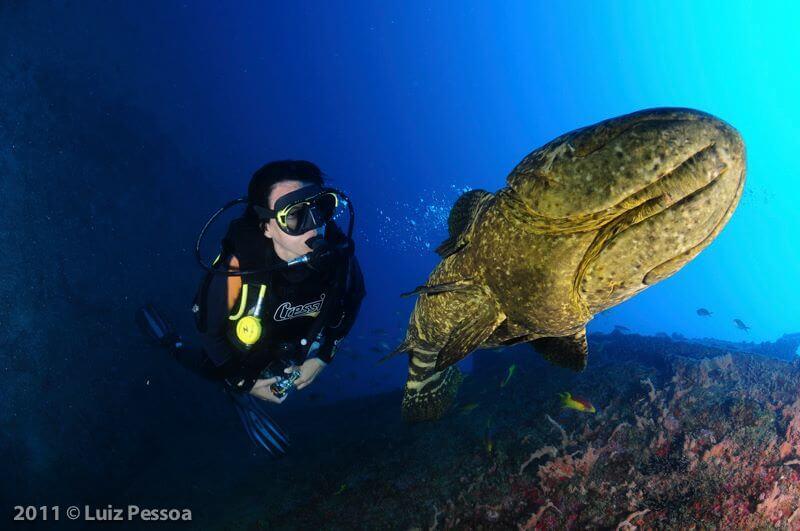 Mergulhador com mero