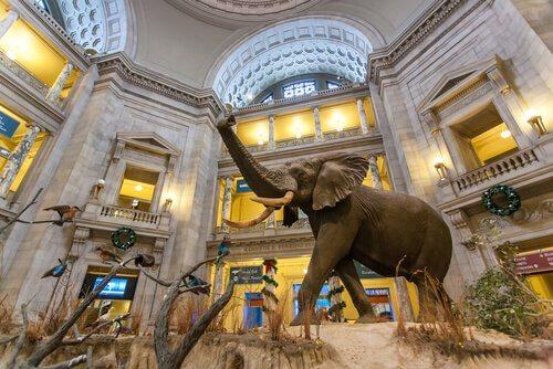 Museu Nacional Smithsonian