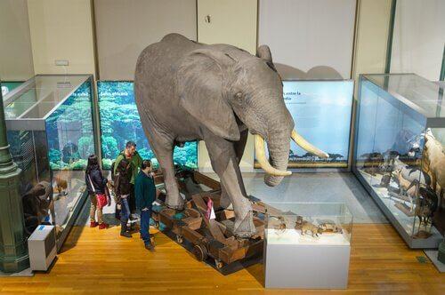 Museu Nacional de Ciências Naturais