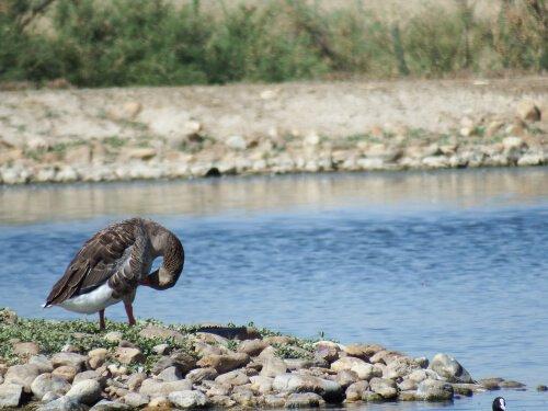 8 dicas para observar a vida selvagem