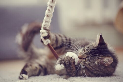 brincar com gatos