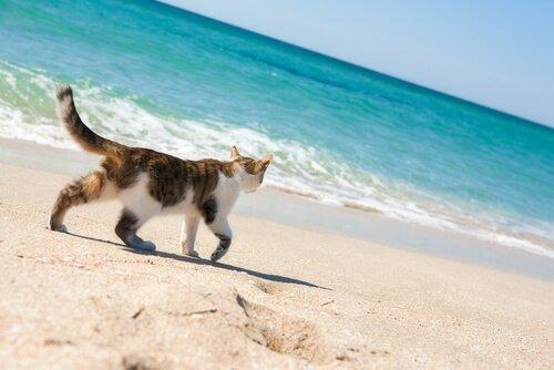 Existem praias para gatos?