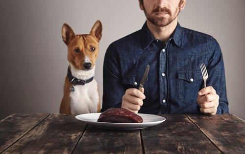 A importância das proteínas para os cães