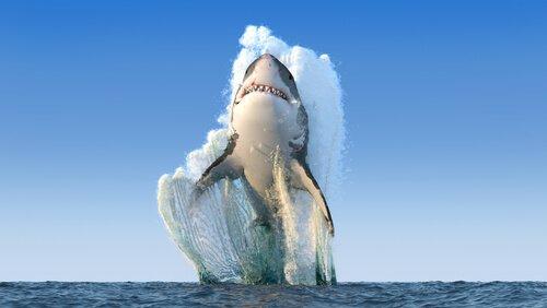 Quando os tubarões atacam?
