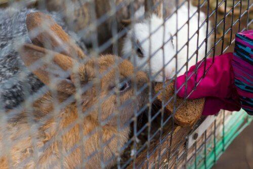 Agressividade em coelhos, causas e soluções