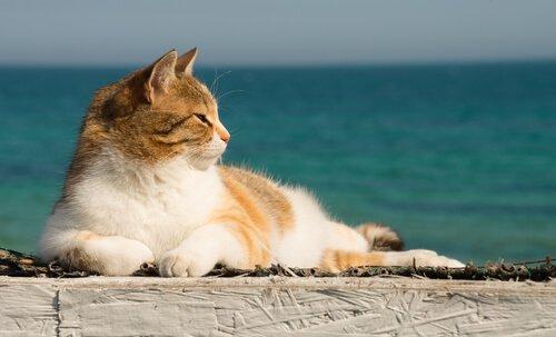 Como refrescar seu gato no verão?