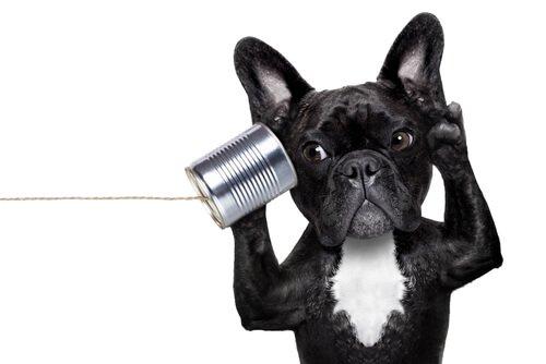 Como reconhecer a surdez em cães