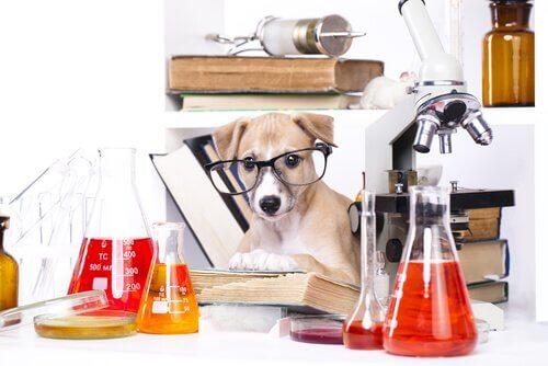 O que são testes de inteligência animal?