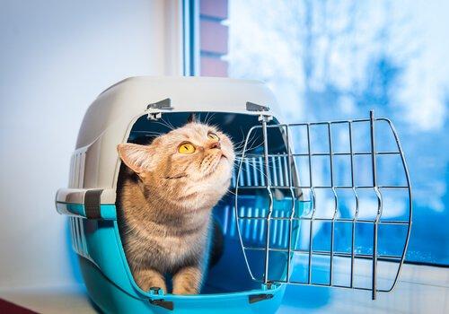 viajar com gatos: leve seu gatinho dentro de uma caixa de transporte