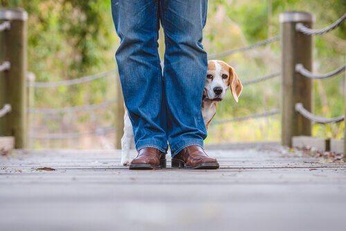 O comportamento do seu cão e a ajuda do veterinário