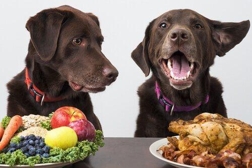 Um cão pode ser vegano?
