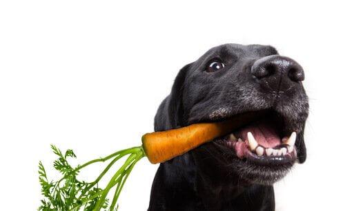 Cães comem vegetais